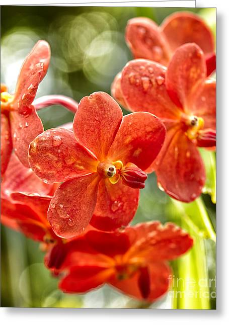 Florida Flowers Pyrography Greeting Cards - Red and Green Greeting Card by Eyzen M Kim
