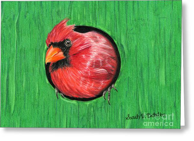 Photo Realism Drawings Greeting Cards - Red And Green Greeting Card by Sarah Batalka