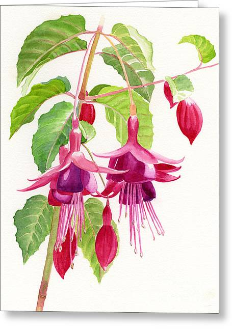 Watercolor! Art Greeting Cards - Red and Purple Fuchsias Greeting Card by Sharon Freeman