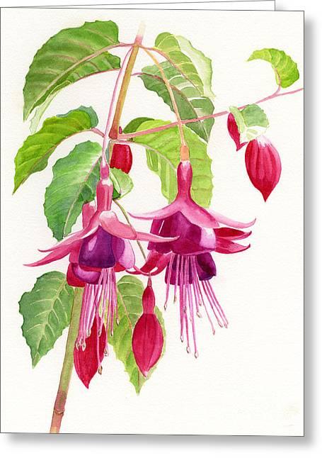 Red And Purple Fuchsias Greeting Card by Sharon Freeman