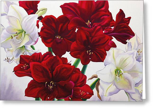 Flower Still Life Greeting Cards - Red And White Amaryllis, 2008 Wc On Paper Greeting Card by Christopher Ryland