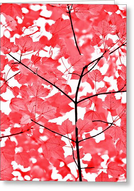 Light And Dark Greeting Cards - Red and White Leaves Melody  Greeting Card by Jennie Marie Schell