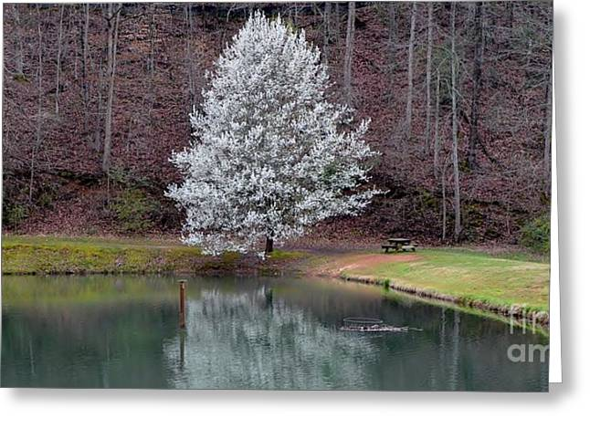 Dogwood Lake Greeting Cards - Red and White Spring Greeting Card by Adelmo Leite de Sa