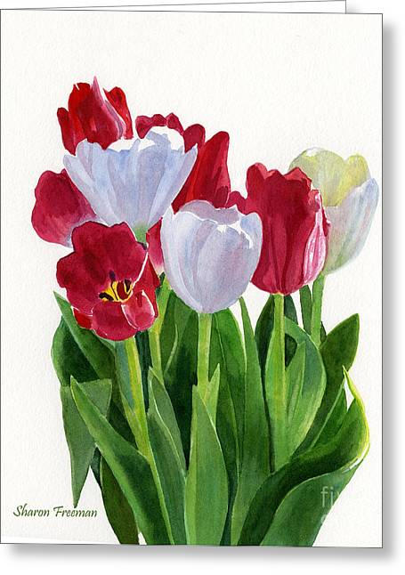 Bold Blossom Greeting Cards - Red and White Tulips Greeting Card by Sharon Freeman