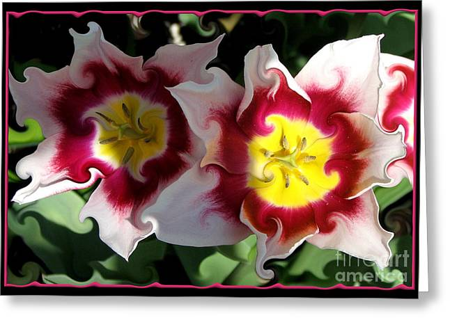 Avant Garde Photograph Greeting Cards - Red and White Tulips with Curlicue Effect Greeting Card by Rose Santuci-Sofranko
