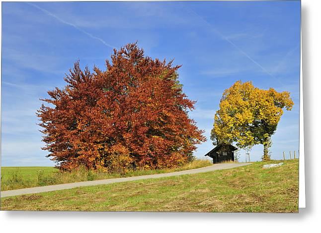 Photos Of Autumn Greeting Cards - Red and yellow autumn colors - beautiful trees in fall Greeting Card by Matthias Hauser
