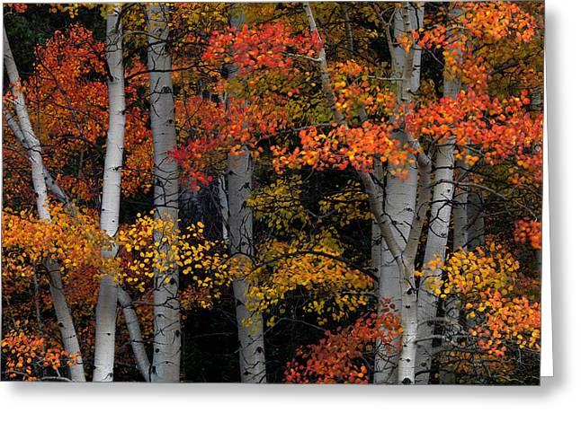 Red And Yellow Greeting Card by Leland D Howard