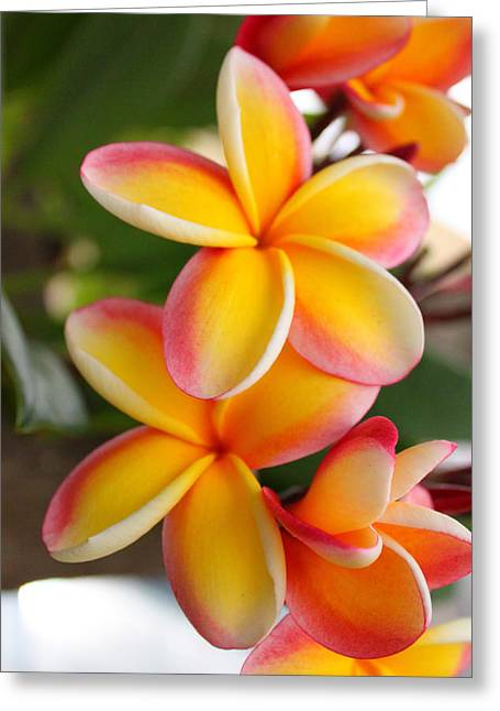 Reds Greeting Cards - Plumeria Smoothie Greeting Card by Brian Governale
