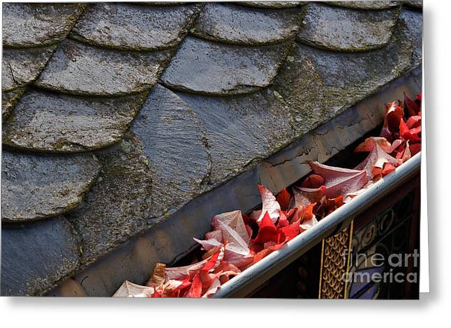 Fallen Leaf Greeting Cards - Red Autumn Leaves in the Gutter Greeting Card by Louise Heusinkveld