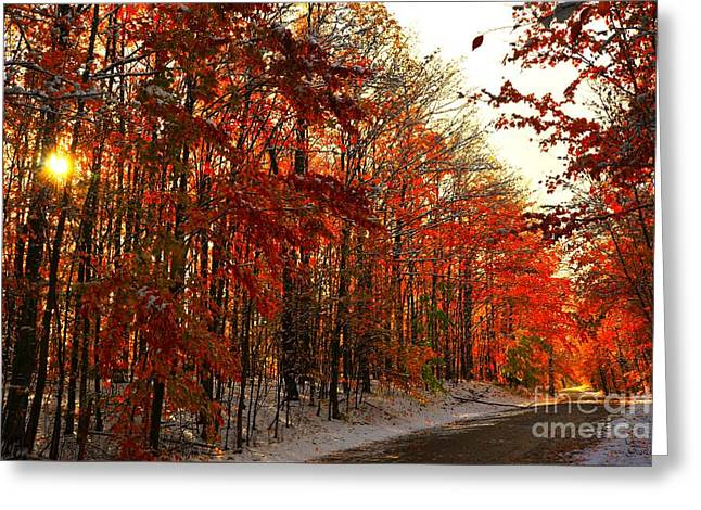Red Autumn Road In Snow Greeting Card by Terri Gostola