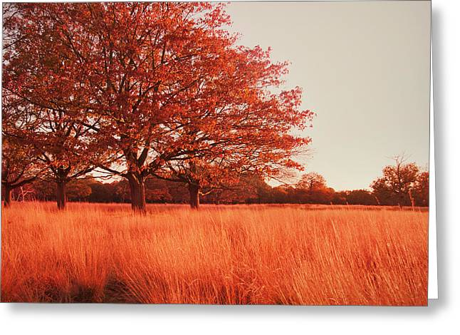 Autumn Landscape Photographs Greeting Cards - Red Autumn Greeting Card by Violet Gray