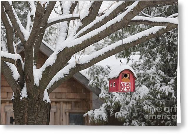 Bird-feeder Greeting Cards - Red barn birdhouse on tree in winter Greeting Card by Elena Elisseeva
