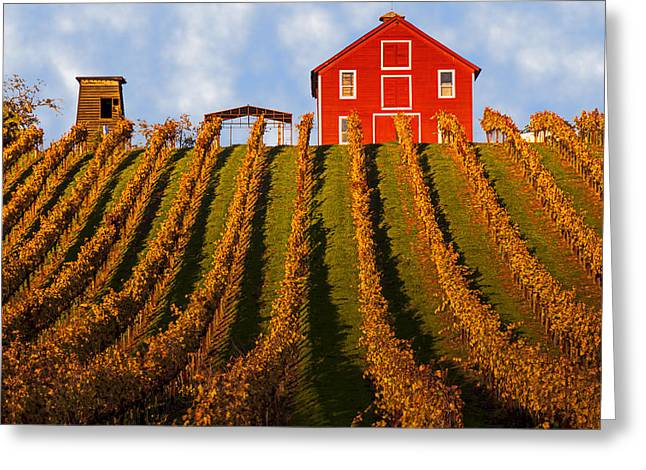 Grapevine Photographs Greeting Cards - Red Barn In Autumn Vineyards Greeting Card by Garry Gay