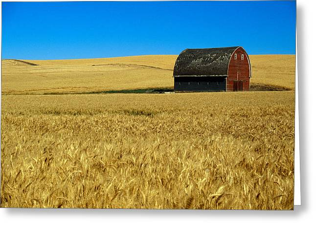 One Object Greeting Cards - Red Barn In Wheat Field, Palouse Greeting Card by Panoramic Images