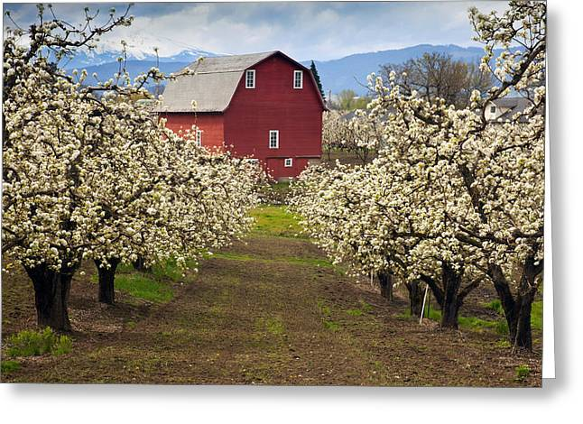 Mt Hood Greeting Cards - Red Barn Spring Greeting Card by Mike  Dawson