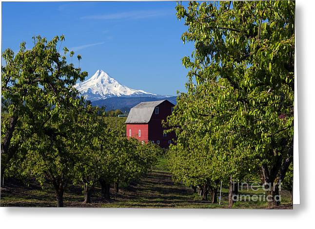 Hood River Oregon Greeting Cards - Red Barn View Greeting Card by Mike Dawson