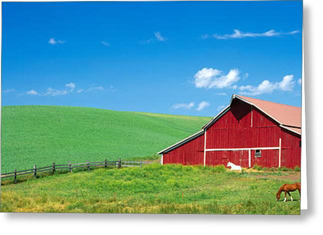Wa Greeting Cards - Red Barn With Horses Wa Greeting Card by Panoramic Images
