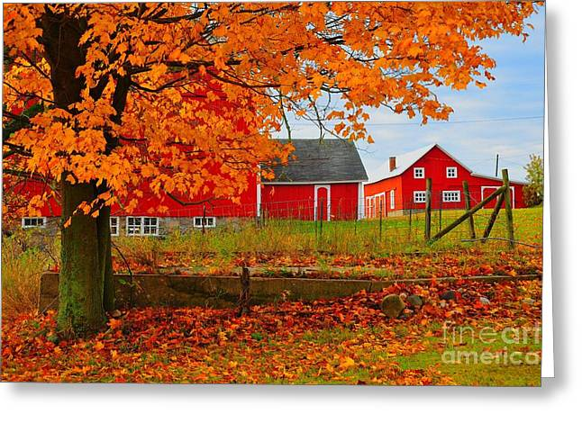 Fallen Leaves Greeting Cards - Red Barns in Autumn Greeting Card by Terri Gostola