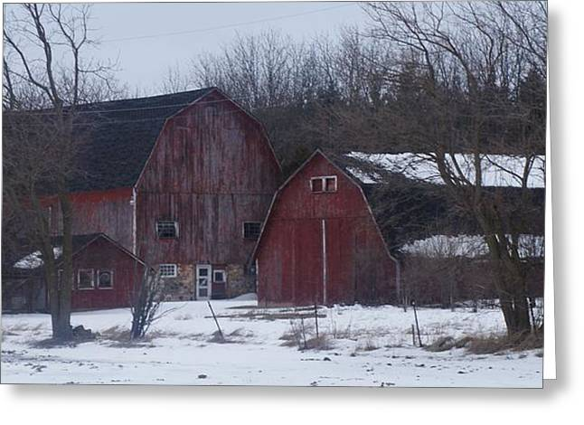 Kristine Bogdanovich Greeting Cards - Red Barns Greeting Card by Kristine Bogdanovich