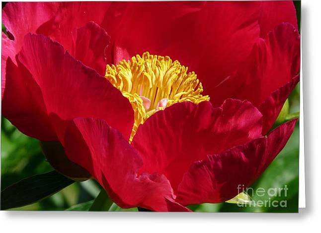 Red Beauty Greeting Card by Avis  Noelle