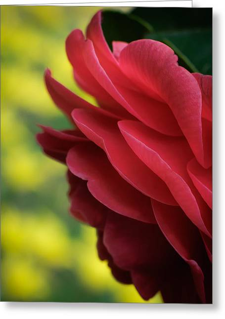 Jamesbarber Greeting Cards - Red Beauty Greeting Card by James Barber