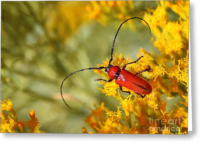 Red Beetle Greeting Card by Marty Fancy