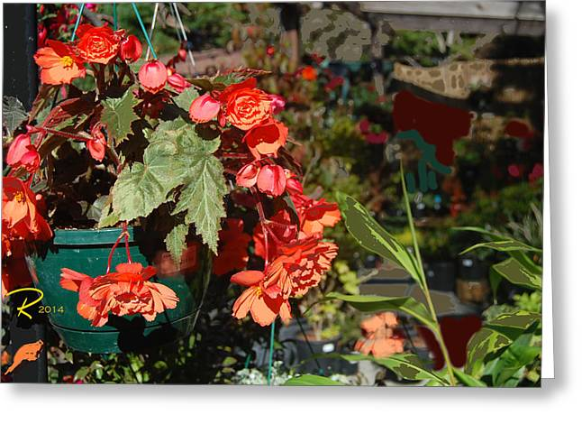 Nature Study Digital Art Greeting Cards - Red Begonias Greeting Card by Ralph Hartwig