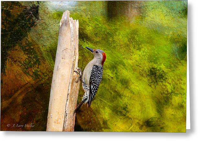 J Larry Walker Greeting Cards - Red-Bellied Woodpecker Happily Pecks Greeting Card by J Larry Walker