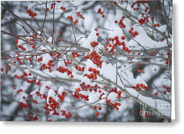 Winter In Maine Greeting Cards - Red Berries Greeting Card by Alana Ranney