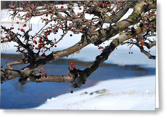 Red Berries And Branches In The Snow Greeting Card by Nancy Mueller