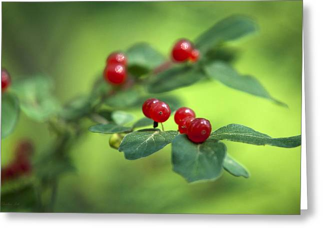Suckle Greeting Cards - Red Berries Greeting Card by Christina Rollo