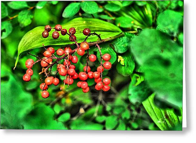 Don Cherry Greeting Cards - Red Berries Greeting Card by Don Mann