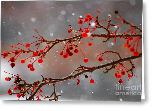 In The Studio Greeting Cards - Branches and Red Berries in Snow  Greeting Card by ArtyZen Studios - ArtyZen Home