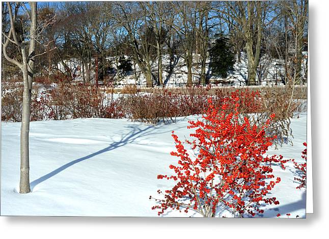 Prospects Greeting Cards - Red berries white snow in Prospect Park Greeting Card by Diane Lent