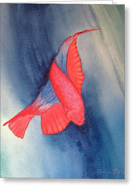 Betta Greeting Cards - Red Betta Fish Greeting Card by Tanya Petruk