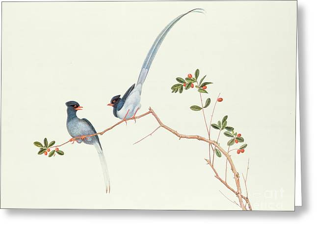 Red Claws Greeting Cards - Red Billed Blue Magpies on a Branch with Red Berries Greeting Card by Chinese School