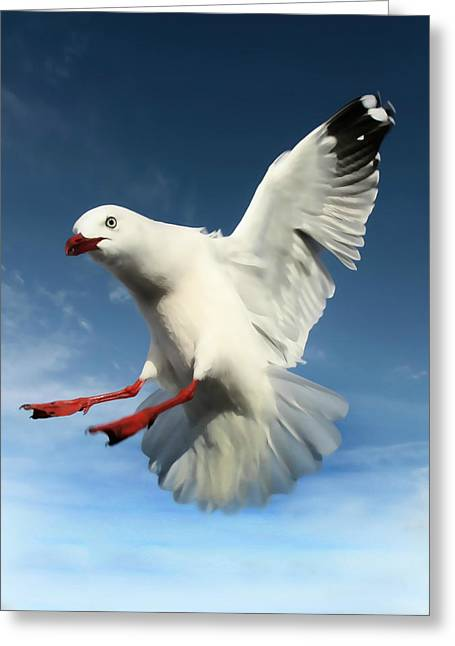 Red Billed Seagull  Greeting Card by Amanda Stadther