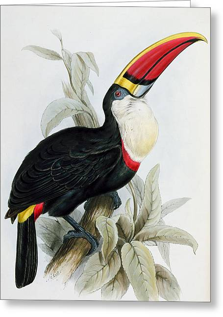Red Claws Greeting Cards - Red-Billed Toucan Greeting Card by Edward Lear