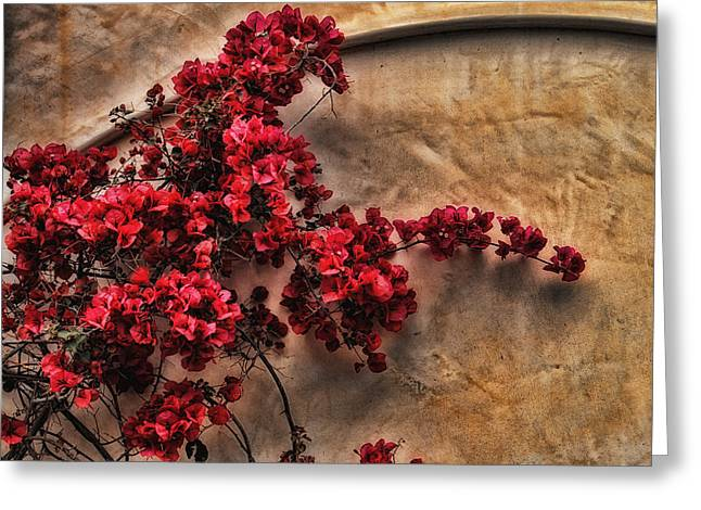 Red Bougainvilla Vine On Stucco Wall Greeting Card by Clare VanderVeen