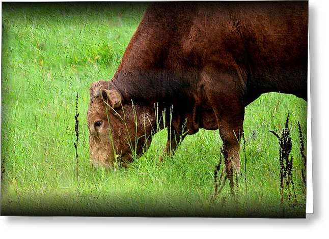 Maria Urso Greeting Cards - Red Brangus Bull Greeting Card by Maria Urso