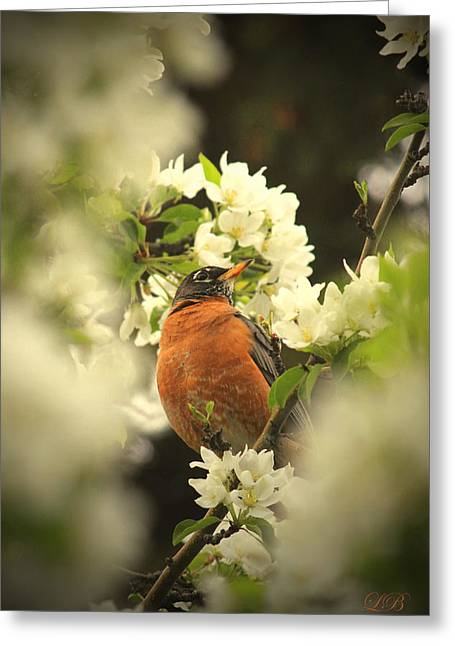 Complimentary Colours Earth Tones Greeting Cards - Red Breasted Beauty Greeting Card by Laura Bentley