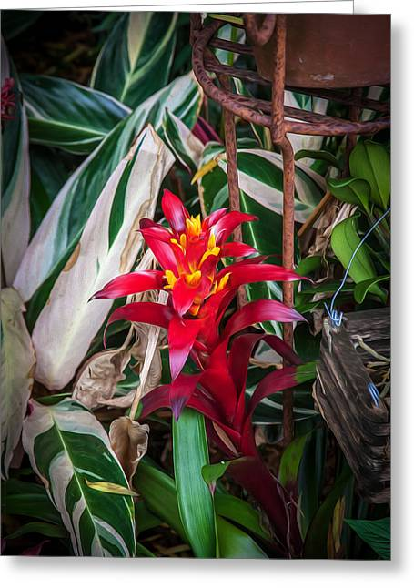 Bromeliad Neoregelia Greeting Cards - Red Bromeliad and Tricolor Gingers Greeting Card by Rich Franco