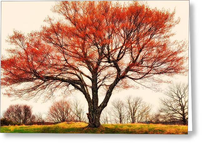 Parkway Digital Greeting Cards - Red Bud Tree - Blue Ridge Parkway I Greeting Card by Dan Carmichael