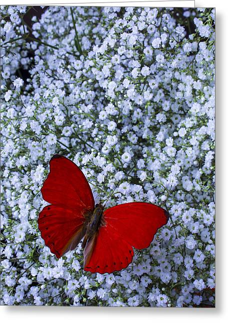 Red Bouquet Greeting Cards - Red butterfly and Babys Breath Greeting Card by Garry Gay
