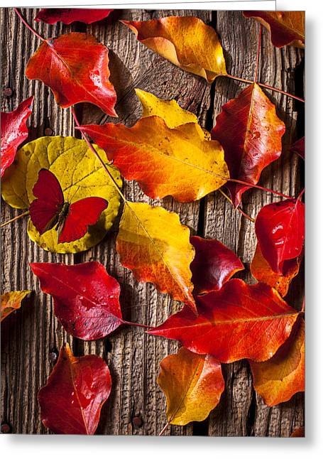 Antenna Greeting Cards - Red Butterfly In Autumn Leaves Greeting Card by Garry Gay
