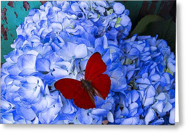 Insects Photographs Greeting Cards - Red Butterfly On Blue Hydrangeas Greeting Card by Garry Gay