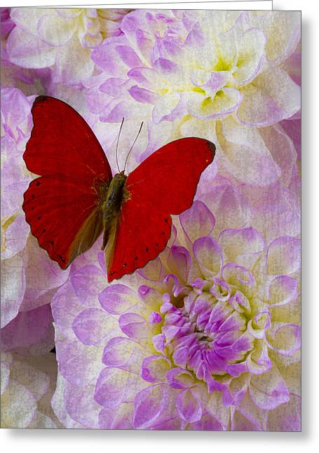 Red Bouquet Greeting Cards - Red butterfly on dahlias Greeting Card by Garry Gay