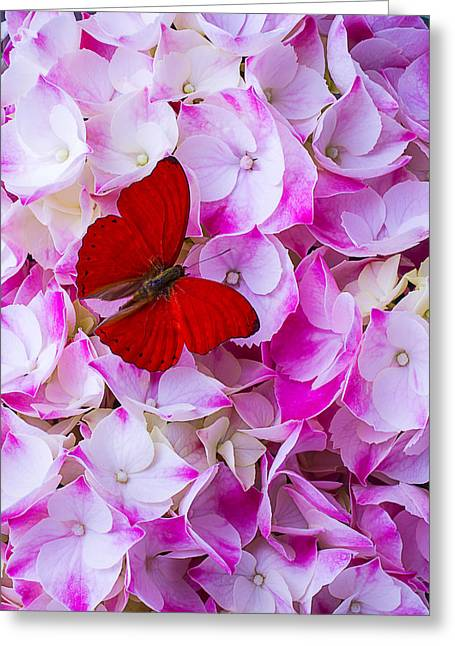 Antenna Greeting Cards - Red Butterfly On Hydrangea Greeting Card by Garry Gay