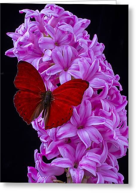Gorgeous Flowers Greeting Cards - Red Butterfly On Pink Hyacinth Greeting Card by Garry Gay