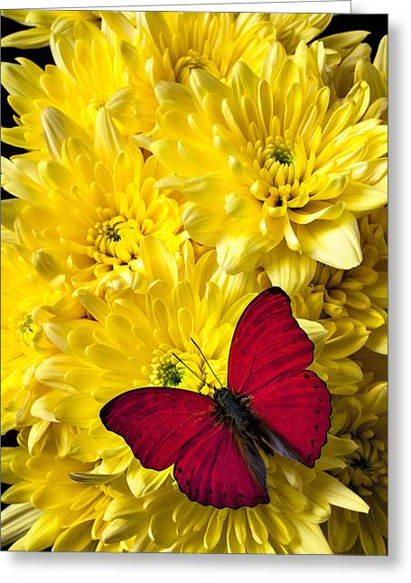 Antenna Greeting Cards - Red butterfly on poms Greeting Card by Garry Gay